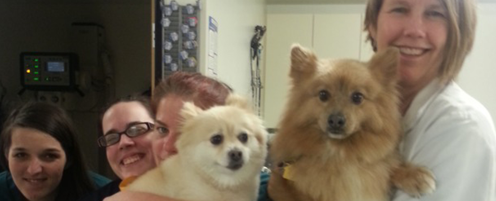 Homepage Team Picture of VCA Southeast Portland Animal Hospital