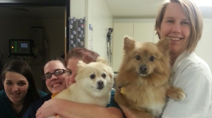 Team Picture of VCA Southeast Portland Animal Hospital