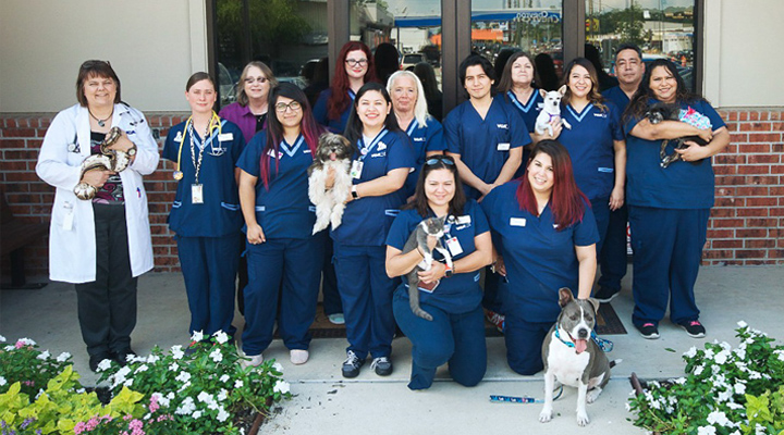Homepage Team Picture of VCA Spring Branch Animal Hospital