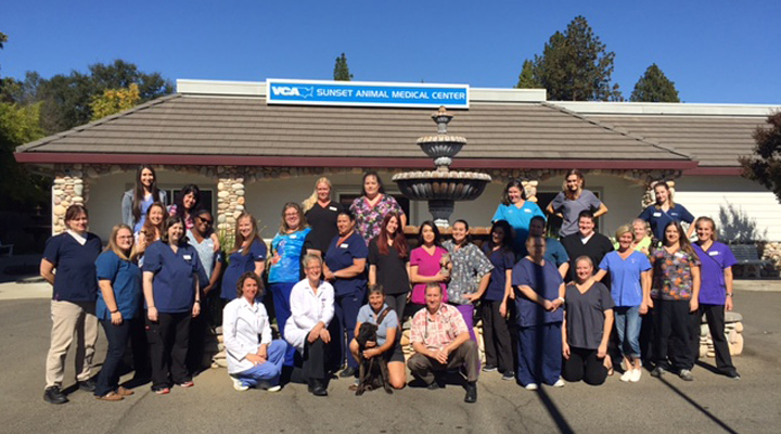 Homepage Team Picture of VCA Sunset Animal Hospital