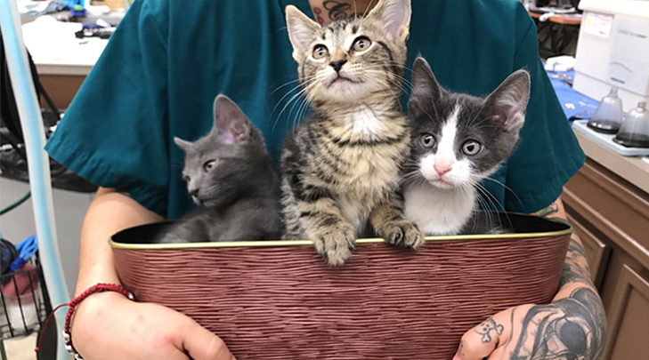 VCA Tanglewood Animal Hospital Kittens in a Basket