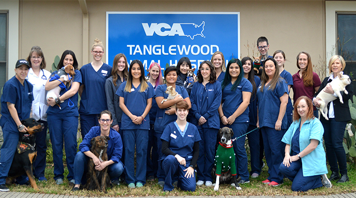 Our Team at VCA Tanglewood