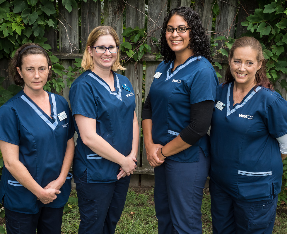 Picture of VCA Todds Lane Animal Hospital Veterinary Support Team