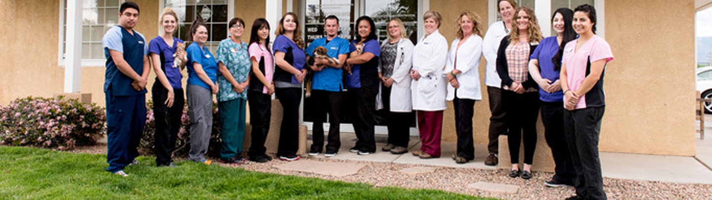 Team Picture of VCA Town and Country Animal Hospital