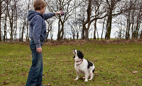 Using Reinforcement and Rewards to Train Your Pet