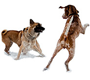 VCA Exercise Dogs Playing