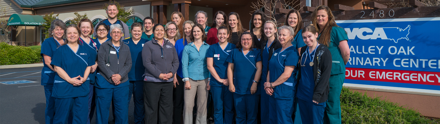 Team Picture of VCA Valley Oak Animal Hospital