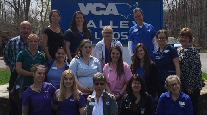Homepage Team Picture of VCA Valley Animal Hospital
