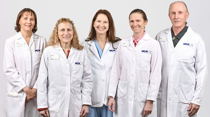 Homepage Team Picture of VCA Veterinary Care Animal Hospital