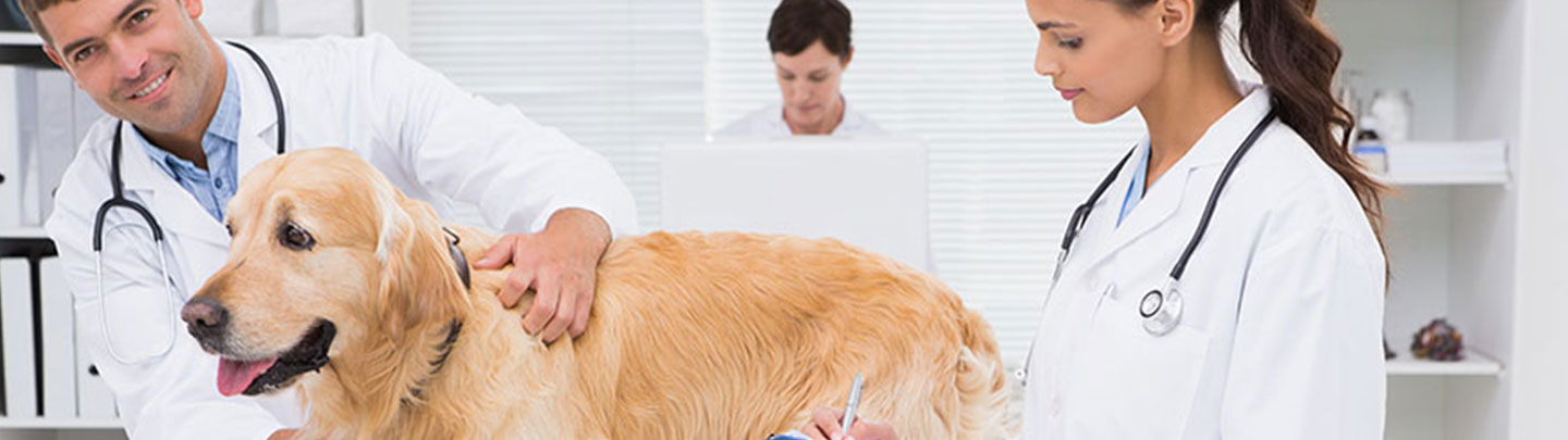 veterinarians and dog