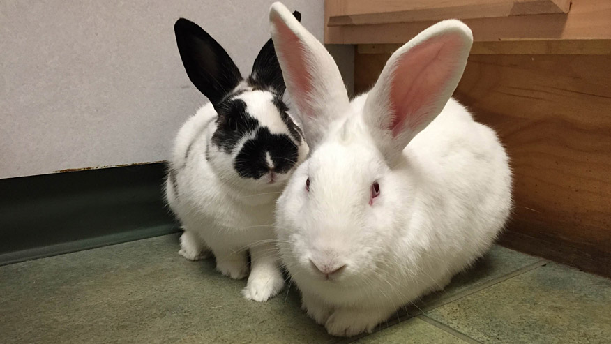 VCA Wakefield Animal Hospital rabbits