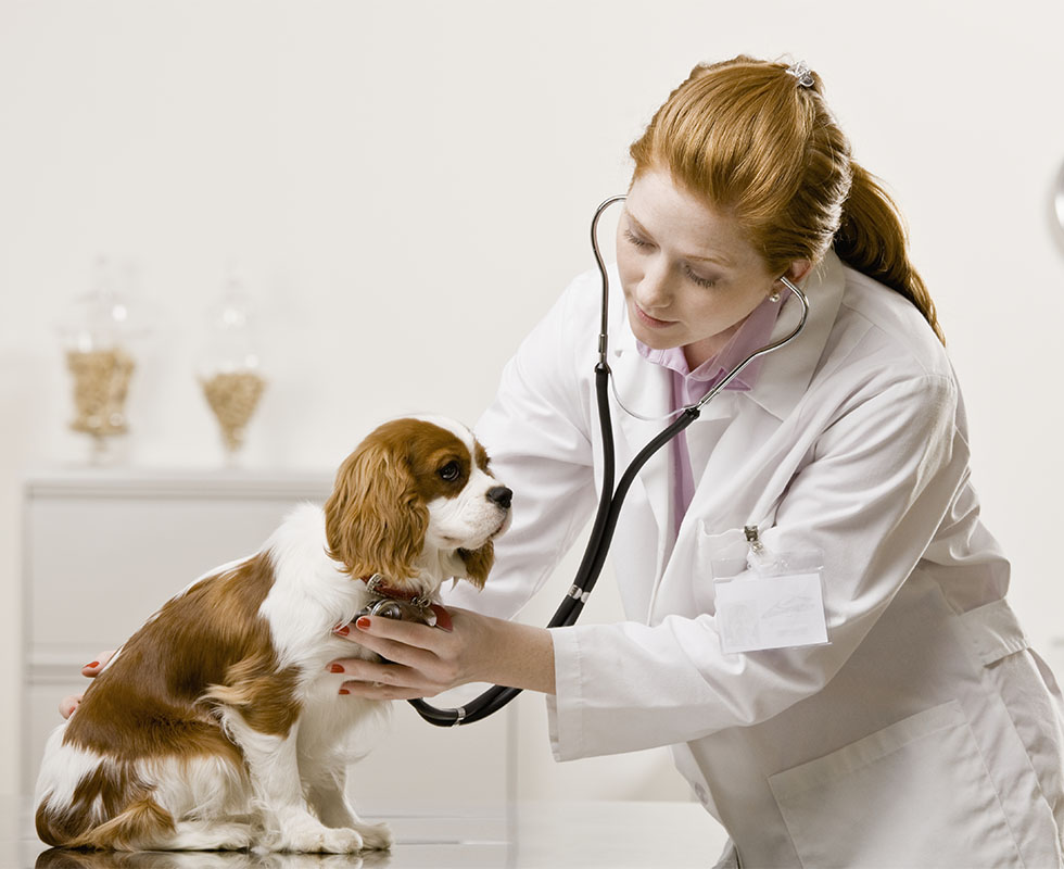 Wickaboag Veterinarians