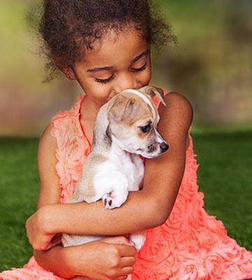 Veterinarians in santa monica ca vca wilshire animal for Dog boarding santa monica
