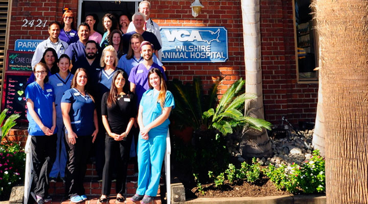Team Picture of VCA Wilshire Animal Hospital