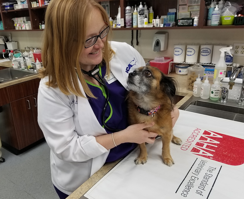 Dr Davis of VCA Woodland South Animal Hospital