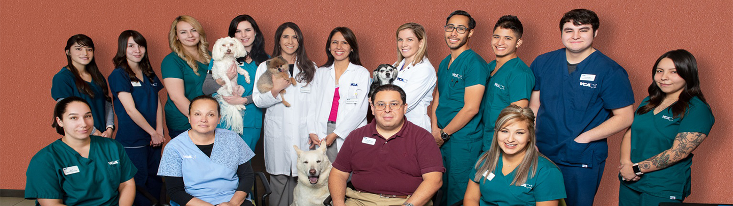 Team Picture of VCA Wyoming Animal Hospital